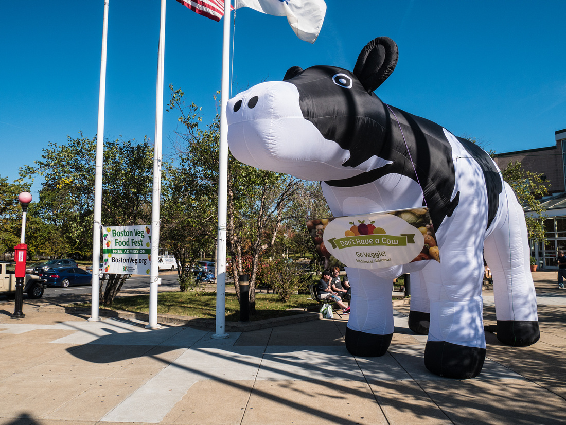 A giant inflatable cow stands outside the food fest