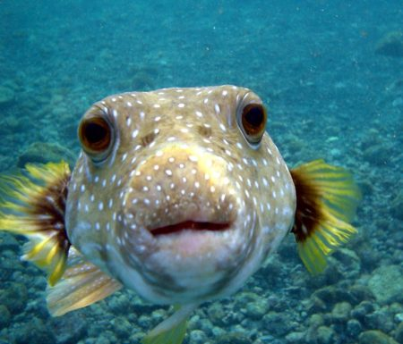 fish looks into the camera