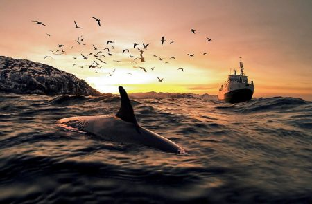 a dolphin surfaces in the ocean, with a Sea Shepard ship on the horizon