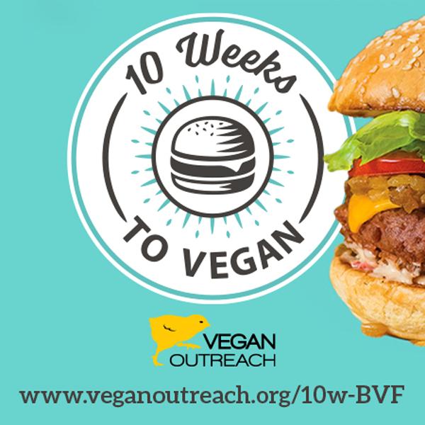10 weeks to vegan, Vegan outreach